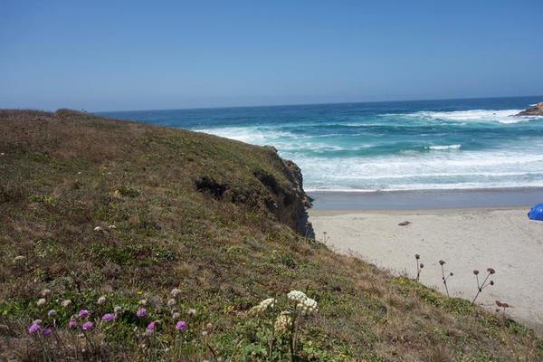Beautiful beach shots + wild flowers.