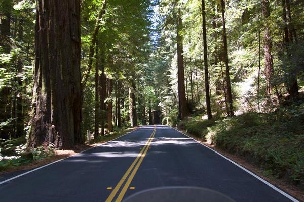 One of my favorites, Avenue of the Giants!
